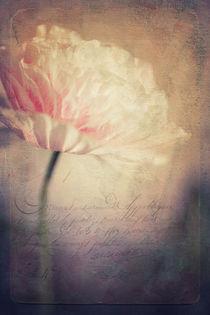 Romance by Priska  Wettstein