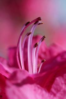 tenderzing by © Ivonne Wentzler