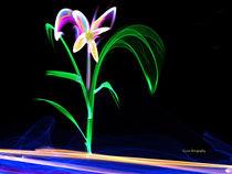 Fluorescent Flower  von Stephen Lawrence Mitchell