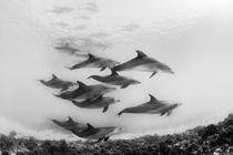 Unterwasser-delfine
