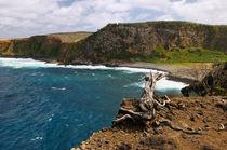 An der Steilküste - Alagoa da Fajazinha by Wolfgang Dengler