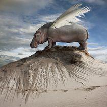 Hippofly by Dariusz Klimczak