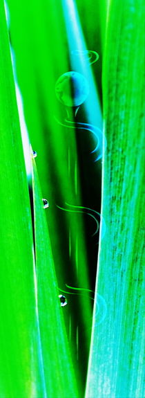 Natur Abstrakt  20 Wasserlilie von Walter Zettl