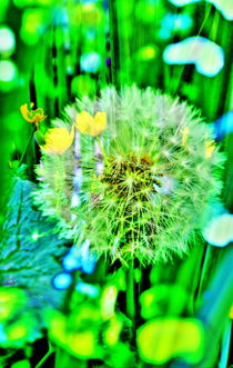Natur Abstrakt  18 Pusteblume by Walter Zettl