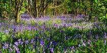 Bluebell Woods #2 von Gerry Walden