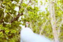 Chirping Duck 2 von Dan Richards