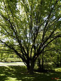 Mein Freund, der Baum von Kirsten Aust