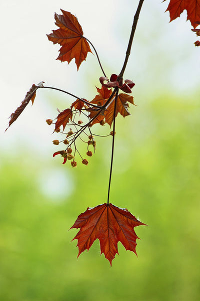 Symphony-of-leaves