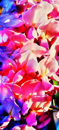 Blütenträume 4 by Walter Zettl
