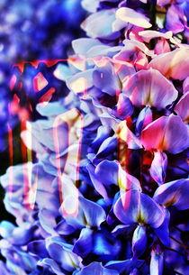Blütenträume 3 von Walter Zettl