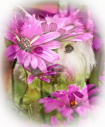 Floral Westie by Amanda Lakey