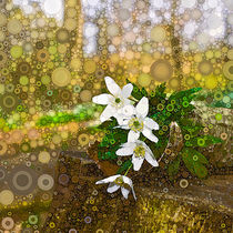 Woodland-flowers