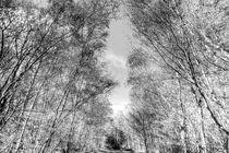 A Forest Walk von David Pyatt