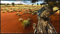 Desert von Chris Rüfli Photography