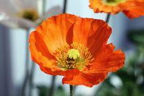 Orange flower von Luisa Azzolini