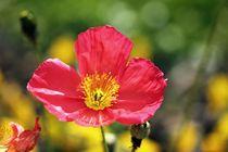Red flower von Luisa Azzolini