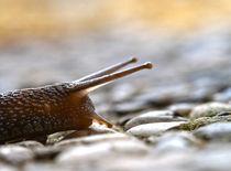 snail by emanuele molinari