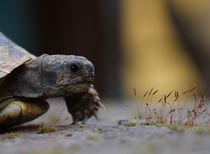 turtle von emanuele molinari