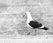 Sea Gull on Wharf Patrol von Jon Woodhams