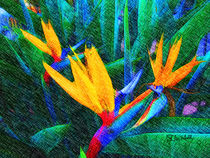 Bird of Paradise von Stephen Lawrence Mitchell
