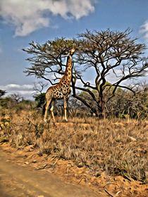 Giraffe by Ken Unger