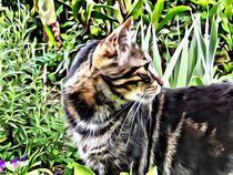 Cat in the Garden von Ken Unger