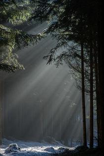 Märchenwald by k3-foto