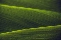 Green Shades II von David Pinzer