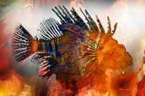 Lionfish 4 by Kume Bryant