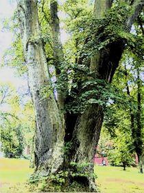 Baumgruppe von Helmut Englisch