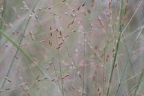 Calming grasses von Ruth Baker