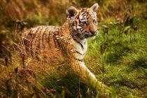Tiger cub von Sam Smith