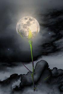 Moon Flower von CHRISTINE LAKE