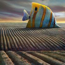 Big Fish by Dariusz Klimczak