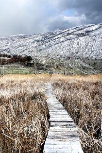 pathway  von maniqqq