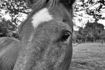 I love horses von leddermann