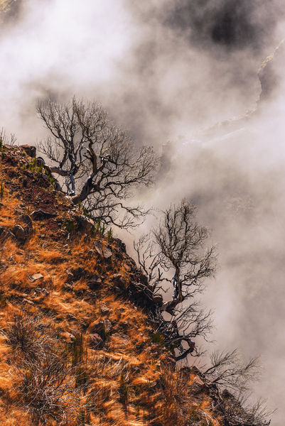 Madeira-3445-davidpinzer-1402