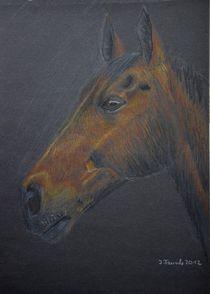 Pferdeportrait von Isabell Tausche