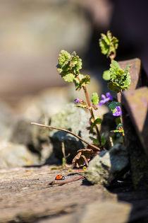 Natur im Gleisbett by Dennis Stracke