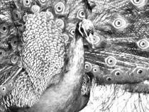 Peacock Portrait Drawing by jfantasma-artistry