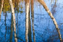Baum Wasserspiegelung -03  von Eva Dietsche