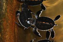 Schildkrötenfarm von ann-foto