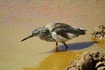 Der Vogel im Matsch by ann-foto