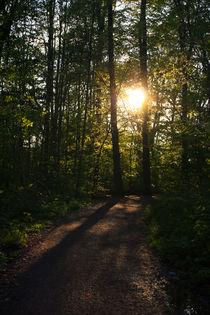 Durch den Wald by sylbe