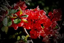 Frühlings Blütenparadies von leddermann