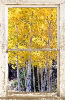 Colorado Gold Rustic Window View von James Insogna