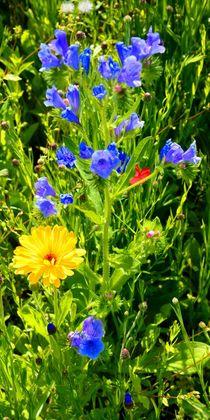 Wiesenblumen by gscheffbuch