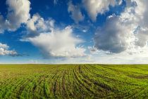 Spring field  by Maxim Khytra