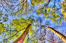 The Wild Forest von David Pyatt