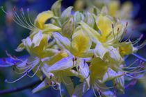 Yellow and blue von uta-behnfeld